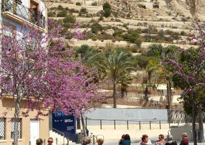 Barrios de Santa Cruz y San Roque, Casco Antiguo de Alicante, conocido como el Barrio (5)