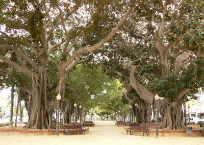 25. Alicante. Parque Canalejas