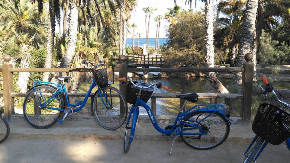 Blue Bike rental & tours