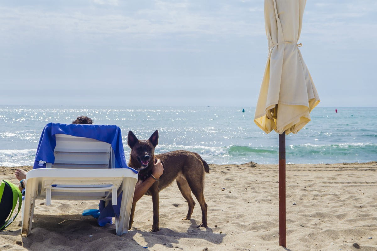 Playa de Aguamarga, playa dog-friendly